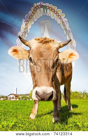 Cow With Flag On Background Series - Commonwealth Of The Northern Mariana Islands