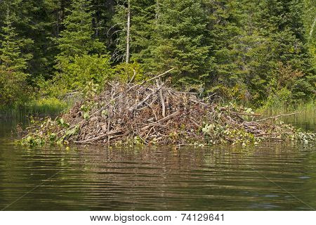 Beaver Lodge On A Wilderness River