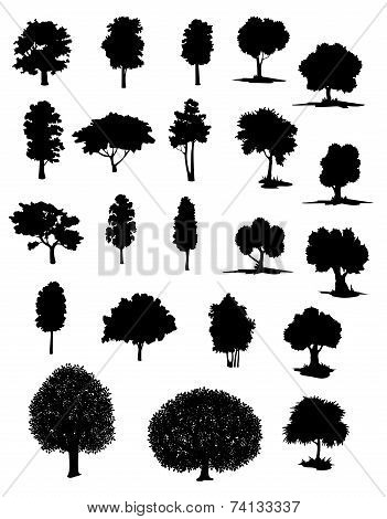 Vector silhouettes of assorted trees