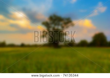 Blur Background Lanscape Shot Rice Field