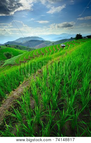 Beautiful Scenery Of Rice Terraces And Mountain