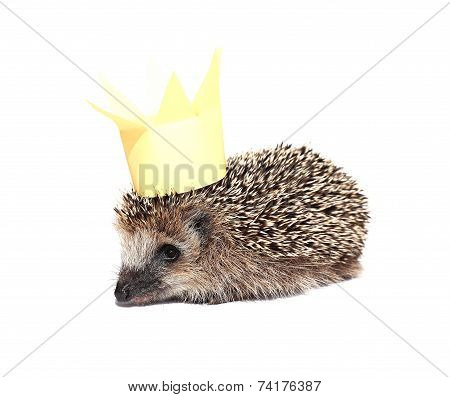 Small Forest Hedgehog With A Crown On The Head Isolated