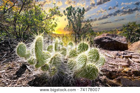 Cactus At Sunrise
