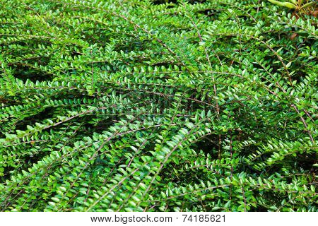 Bushes abd branches - abstract nature background