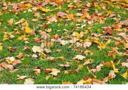 Landscape With Fallen Leaves