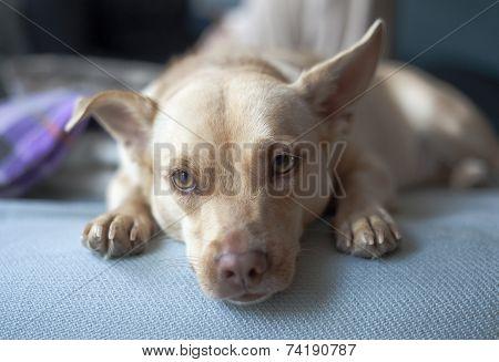Kira Dog mix