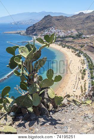View of  cactus and Las Teresitas Beach, Tenerife, Spain