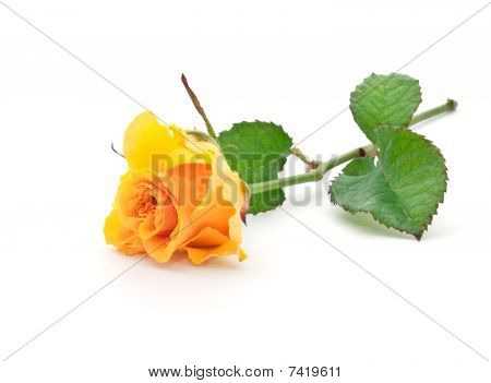 Beautiful Orange Rose With Leaves On A White Background