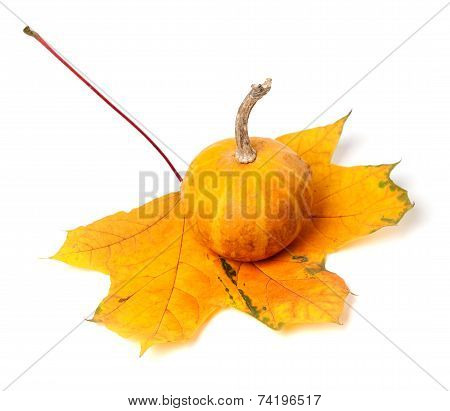 Small Decorative Pumpkin On Autumn Maple-leaf