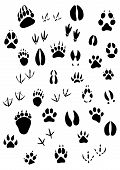 pic of hoof prints  - Big set of animal footprints include mammals and birds - JPG