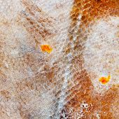stock photo of flounder  - flounder fish texture - JPG