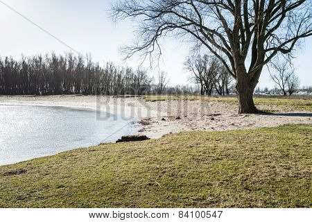 Bare Tree On The Bank Of A River
