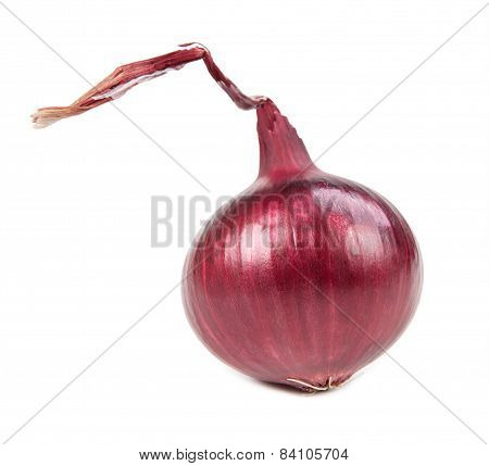 Beautiful Onion Isolated On White Background