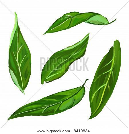 citrus leaves set  vector illustration  hand drawn  painted