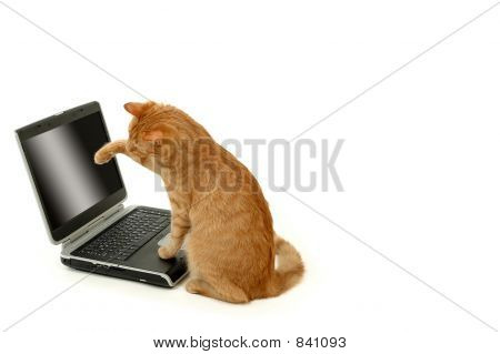 Tiger and laptop