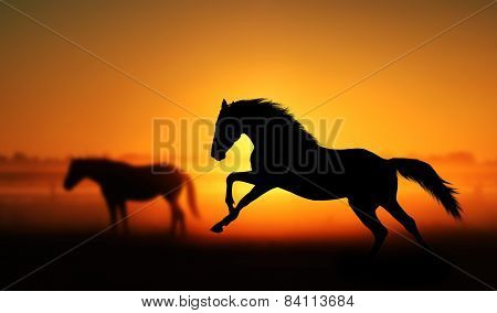 Silhouette of beautiful horse on a background of sunrise.