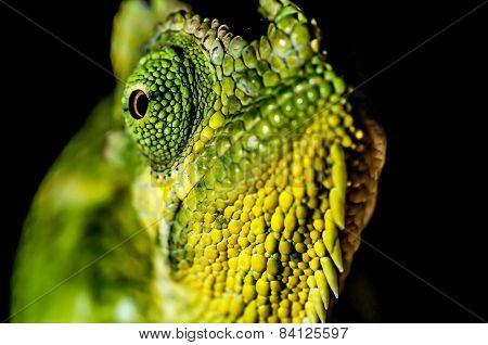 Eye Of A Chameleon
