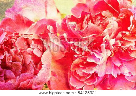 Big red peonies background