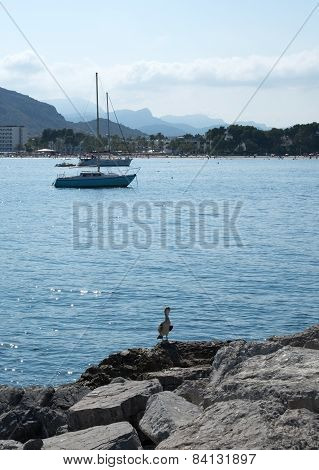 Sailboat in the bay and large bird