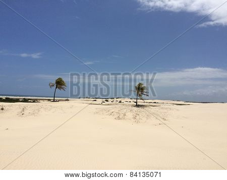 Mangue seco Island