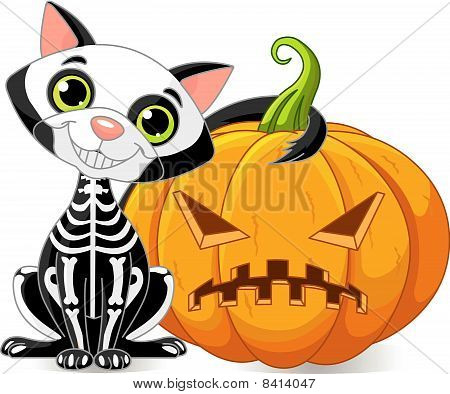 Black cat and the pumpkin