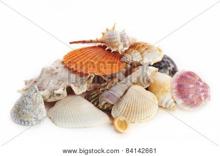 Colored Sea Cockleshells And Starfish