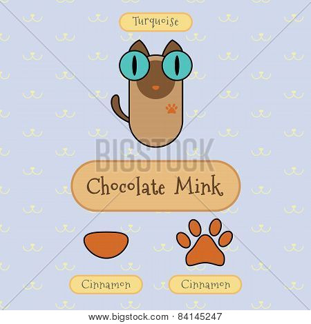 Chocolate Mink Cat.