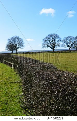 Farm hedge in the English countryside.