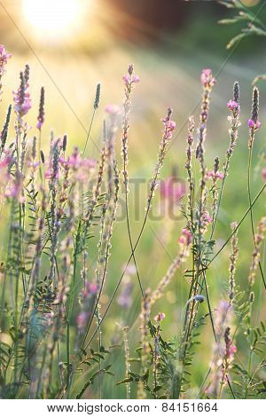 Close-up Of Flowering Meadow