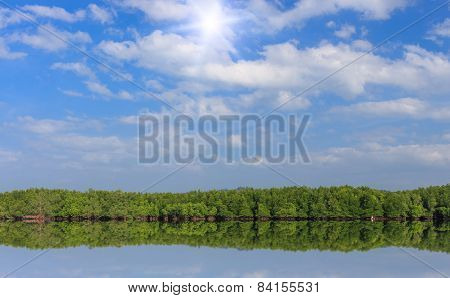 Mangrove Forest And Blue Sky