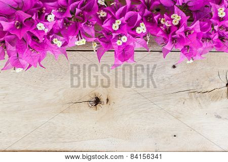 Bougainvillea Flower On Grain Wood Background