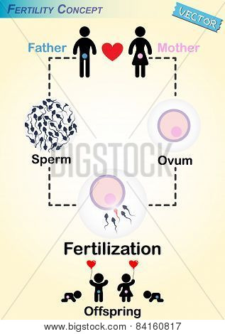 Human Fertilization Diagram