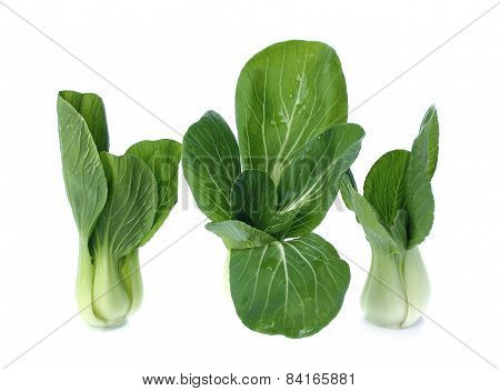 Bok Choy (chinese Cabbage Or Qing Geng Cai) Isolated On White
