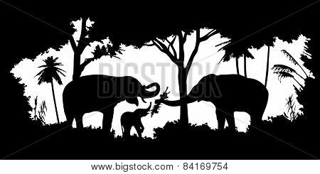 animal of wildlife (elephant)