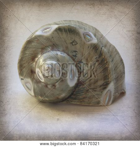 Intricate Seashell on Grunge Vintage Texture
