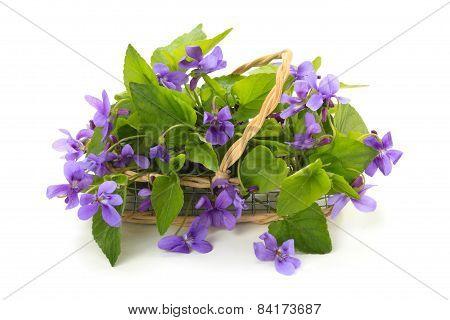 Wild Spring Flowers.