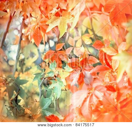 Soft focus on colorful foliage