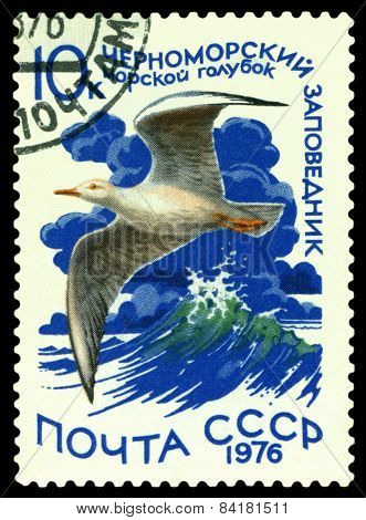 Vintage  Postage Stamp. Slender-billed Gull.
