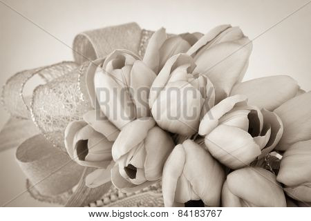 Sepia Toned Tulips With Ribbon