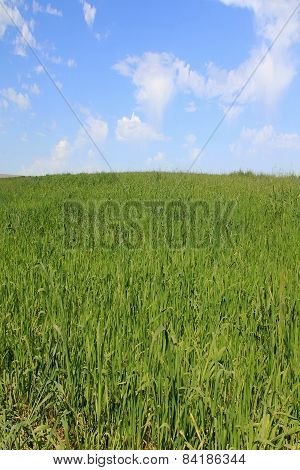 Field Of Green Grass On  Blue Sky Background
