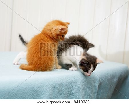 Three Little Kitten Looking Down From The Table