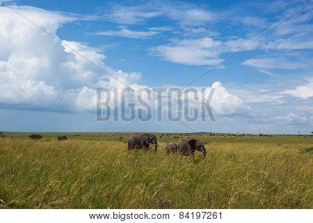 elephants, nature reserve, cloud, day, sun, travel, Kenya