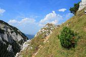 stock photo of mica  - Romania nature - JPG