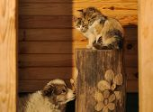 foto of puppy kitten  - Puppy and kittens with a wooden background.