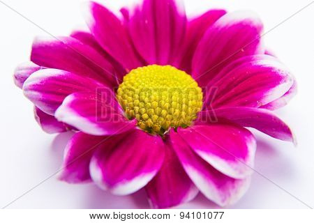 Soft abstract image of vivid flower. Macro with shallow dof.