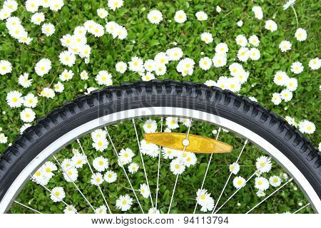 Bicycle Wheel On Green Meadow Background