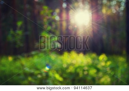 Blurred Forest Background With Green Grass And Sunbeams Through The Trees