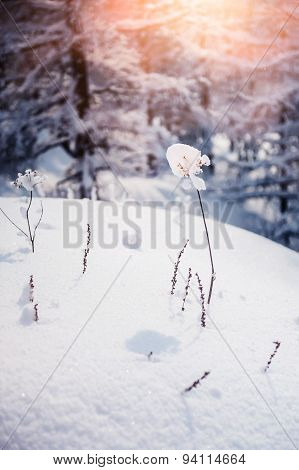 Snow-covered Plants In Winter Forest