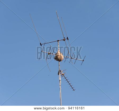 Nest On Antenna With Blue Sky