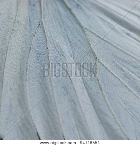 White Butterfly Wing
